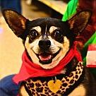 Adopt A Pet :: Gracie Lou