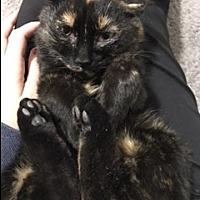 Adopt A Pet :: Juliette - North Branch, MI