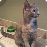 Adopt A Pet :: Sparkles - Plainville, MA