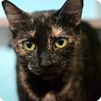 Adopt A Pet :: Paisley - New Orleans, LA