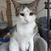 Adopt A Pet :: Jolene - Stuart, VA