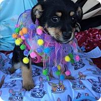 Adopt A Pet :: Dori - Brea, CA