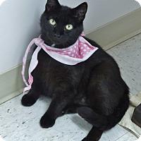 Adopt A Pet :: Farah - Chambersburg, PA