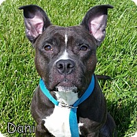 Adopt A Pet :: Dani - Tremont, IL