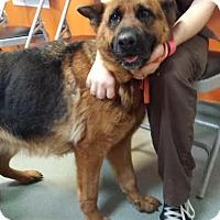 Adopt A Pet :: Penelope - Westminster, CA