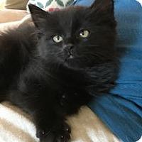 Adopt A Pet :: Kylo - Chattanooga, TN