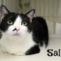 Adopt A Pet :: Sally - Melbourne, KY
