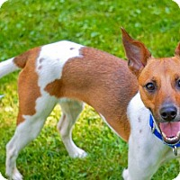 Adopt A Pet :: Riley (WI) - Greenfield, WI