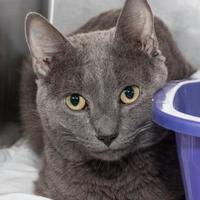 Adopt A Pet :: Stan - Stroudsburg, PA