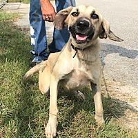 Adopt A Pet :: Punkin - Waycross, GA