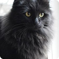 Adopt A Pet :: Hope - Columbus, OH