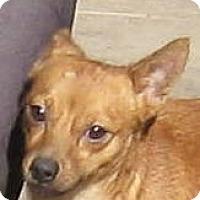 Adopt A Pet :: Bubba - Oakley, CA