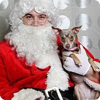 Adopt A Pet :: Leona - Shawnee Mission, KS