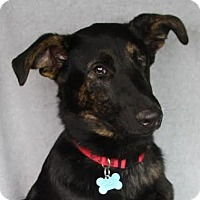 Adopt A Pet :: Ara - Minneapolis, MN