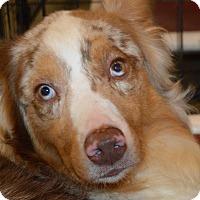 Adopt A Pet :: Murdock - Prole, IA