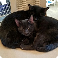 Adopt A Pet :: Lincoln - Geneseo, IL