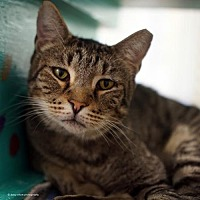 Adopt A Pet :: Bernard - Tucson, AZ