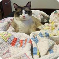 Adopt A Pet :: Sandy - Davis, CA