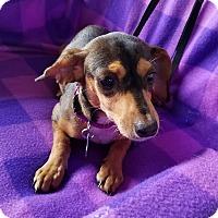 Adopt A Pet :: Trivoli - Hamilton, ON