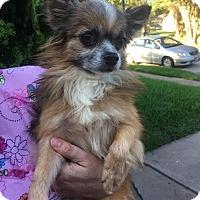 Adopt A Pet :: Malone - conroe, TX