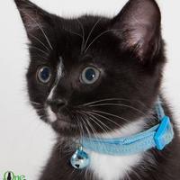 Adopt A Pet :: Wilhelm - Savannah, GA