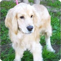 Adopt A Pet :: Dasher - Sugarland, TX