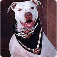 Adopt A Pet :: Allie - Hoffman Estates, IL