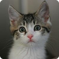 Adopt A Pet :: Caleb - Canoga Park, CA