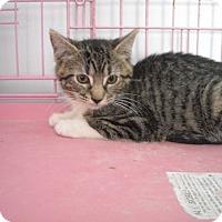 Adopt A Pet :: Kelly - Riverside, RI