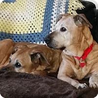 Adopt A Pet :: Brady - Burbank, CA