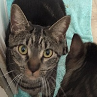 Adopt A Pet :: Zoey - Sacramento, CA
