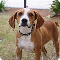 Adopt A Pet :: Fido - Brunswick, GA
