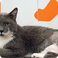 Adopt A Pet :: 'Stache - Los Angeles, CA