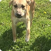 Adopt A Pet :: Rita - Garden City, MI