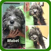 Adopt A Pet :: MABEL - Malvern, AR