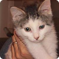 Adopt A Pet :: Cream - Cincinnati, OH