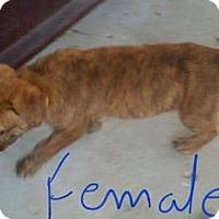 Adopt A Pet :: Back Flip - Mission, KS