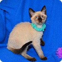 Adopt A Pet :: Mulan - Buford, GA