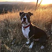 Adopt A Pet :: Kona Bear - Saugus, CA
