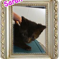 Adopt A Pet :: Sarah - Brentwood, NY