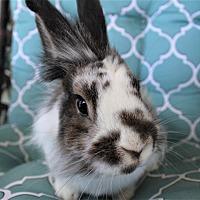 Adopt A Pet :: Bungee - Hillside, NJ