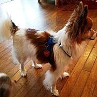 Adopt A Pet :: Stevie (GA) age 12 - Marietta, GA