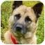 Photo 1 - German Shepherd Dog Mix Dog for adoption in Los Angeles, California - Cami von Callahan