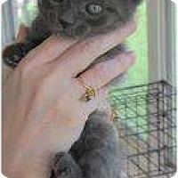 Adopt A Pet :: Nermel - Warren, MI