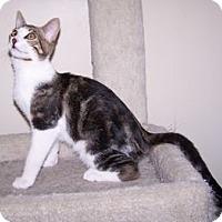 Adopt A Pet :: K-Sophie4-Jersey - Colorado Springs, CO
