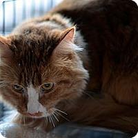 Adopt A Pet :: Carmel - Brooklyn, NY