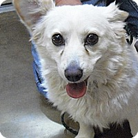 Adopt A Pet :: Dazy - Wickenburg, AZ