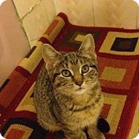 Adopt A Pet :: MAXIMUS &CONSTANTINE - Whitestone, NY