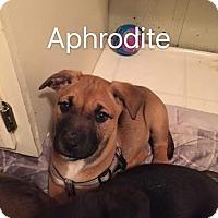 Adopt A Pet :: A Litter - CHICAGO, IL