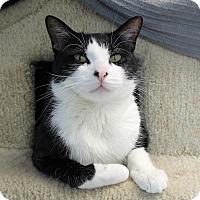 Adopt A Pet :: Deputy Dewey - Chicago, IL